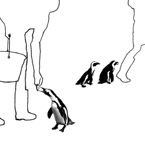 Illustration from 'Penguin Pool' book.